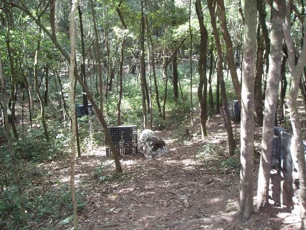 Campo Bosque